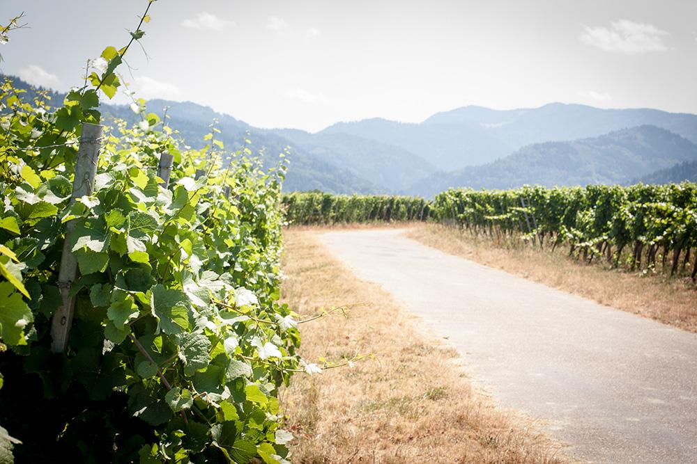 Belsazar Vermouth © www.spirit-ambassador.de