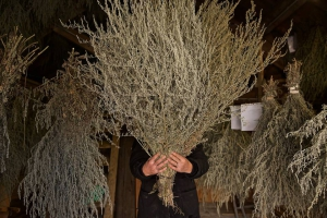 Das namengebende Wermutkraut (artemisia absinthium) | © Distillerie GUY, Pontarlier